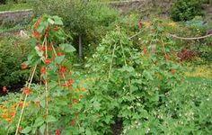 JULI NU? 10 gode råd til haven i juli - hvor vi flytter i hus med stor have :D