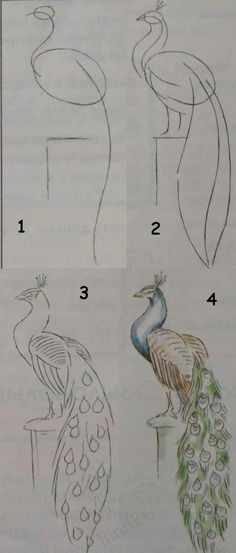 Drawing lessons for beginners - A PEACOCK / How to draw. Painting for kids / Luntiks. Crafts and art activities, games for kids. Children drawing and coloring pages #drawinganimals