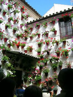 the Festival of patios in Spain, flower pots hanging on the walls