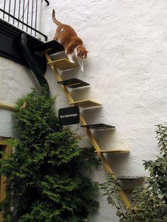 Kattentrap, een mooi manier voor je kat van dak naar tuin en visa versa.