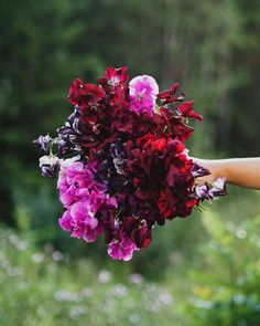 I wish you could smell this bouquet from my garden. Bouquet, Garden, Garten, Bouquet Of Flowers, Lawn And Garden, Bouquets, Gardens, Gardening, Outdoor