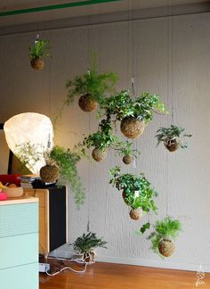 Cheap And Easy Useful Tips: Artificial Plants Indoor Hanging small artificial plants flower arrangements.Artificial Plants Ideas artificial flowers how to make. Small Artificial Plants, Artificial Plant Wall, Artificial Flowers, Indoor Trees, Indoor Plants, Garden Plants, House Plants, Plantas Indoor, String Garden