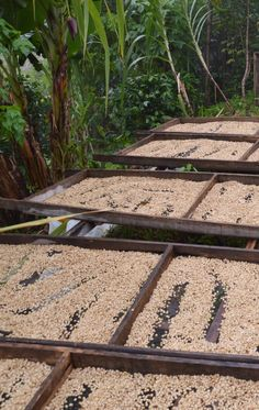 Costa Rica is known for its coffee and one of the best ways to learn more about this important industry is on a coffee tour. A couple of good options for tours are Café Britt near San Jose and El Toledo in Atenas.