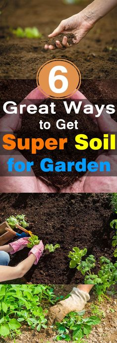 To have a lush and productive garden, healthy soil is essential and if you want to improve your garden soil here weve 6 Most Important Tips. Gardening For Beginners, Gardening Tips, Flower Gardening, Soil Improvement, Garden Pests, Garden Fertilizers, Potager Garden, Potting Soil, Edible Garden