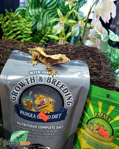 A complete gecko diet, Pangea Gecko Diet Breeding Formula is designed to fulfill the unique requirements of reproductive crested geckos. The main source of fat and protein in this food is from Insects (crickets and black soldier fly larvae) while remaining palatable and well-liked by almost all geckos. 🦎 Visit our store for more healthy treats and finds for your reptile babies! #MagazooReptiles Black Soldier Fly, Crested Gecko, All Fruits, Crickets, Reptile Accessories, Geckos, Healthy Treats, Reptiles, Insects
