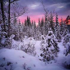 *🇳🇴 Snowy sunset (Harestua, Norway) by Kari Mathisen (@mathisenma) on Instagram ❄️🌅 Nature Photography Tips, Snow Photography, Beautiful World, Beautiful Places, Dark Winter, Winter Beauty, Biomes, Winter Scenes, Winter Time