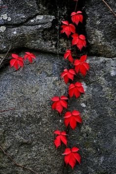 Colors ~ Red and Gray