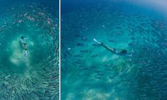 Snorkeller dives into school of fish making for breathtaking photos-how fun!
