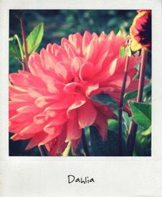 17 Meilleures Images Du Tableau Fleurs D Aout Et Septembre