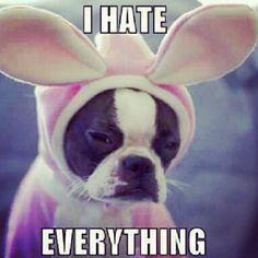 #dogmeme #dog #funny