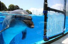 Kujukushima Aquarium, Sasebo, Japan - Google Search