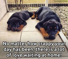 The stress of the day just disappears when I get home to my dog. Dog Training Methods, Basic Dog Training, Dog Training Techniques, Training Dogs, Potty Training, Rottweiler Funny, Rottweiler Puppies, Rottweiler Quotes, German Rottweiler