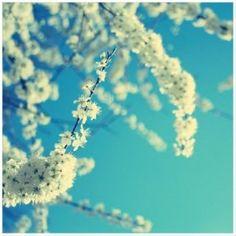 Accrochez cette jolie photo de cerisier en fleurs au mur et fêtez le printemps toute l'année. Dans les p'tites boutiques Marie Claire Idées .com