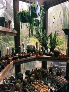 Simple Aesthetics shared by A Y A on We Heart It PLANTS cactus plants Room 038 decor nature greenNature Sch neSachen MydrSimple Aesthetics shared by A Y A on We Heart It. Cacti And Succulents, Planting Succulents, Planting Flowers, Deco Cactus, Cactus Cactus, Little Green House, Cactus Plante, Plant Aesthetic, Witch Aesthetic