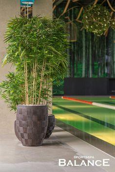 Деревья искусственные в дизайнерских кашпо для оформления бассейна. Wellness&spa Balance.  Декорирование искусственными растениями. Реализация студии Iren Lakusta.