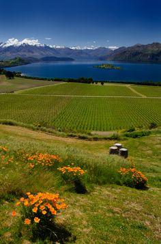 Rippon Winery & Wanaka Lake