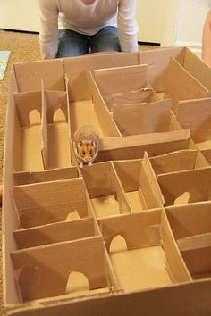 Perfect for a rainy day - Hamster maze: