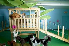 -Repinned-Doggie Daycare with huge tree house.