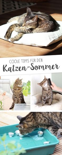 Coole Tipps für den heißen Katzen-Sommer auf www.aentschiesblo… Astuces sympas pour l& chaud www. Crazy Cat Lady, Crazy Cats, I Love Cats, Cute Cats, Living With Cats, Cat Hacks, Cat Room, All About Cats, Animals And Pets