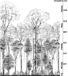 WHAT IS THE CANOPY? In the rainforest most plant and animal life is not found on the forest floor, but in the leafy world known as the canopy. The canopy, which may be over 100 feet (30 m) above the ground, is made up of the overlapping branches and leaves of rainforest trees. Scientists estimate that 60-90 percent of life in the rainforest is found in the trees, making this the richest habitat for plant and animal life.