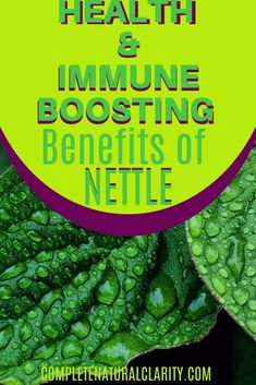 Amazing Health  Immune Boosting Benefits of Stinging Nettle! In this time of a major health crisis, it's more important than ever to nurture our bodies with a healthy, optimally functioning immune system! Did you know that Nettle in the form of Nettle Tea or Nettle Extract has a TON of health benefits, providing a MAJOR IMMUNE BOOST!? From pain relief, to digestive health,  an astounding range of benefits I summed up in my latest blog post on this amazing natural remedy that offers SO much!