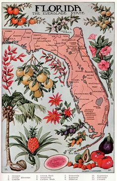 Florida page 1046 to 1047 | This illustration is from the pu… | Flickr