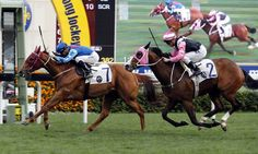 UPI Horse Racing Roundup : International Horse Breeding and Racing news updated daily, www.thoroughbrednews.com.au