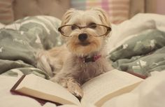 """Can't you see I'm in the middle of a very important chapter of Freud?"" 