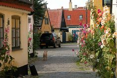 Picturesque streets in the old town of Dragør, Denmark - See more at: http://visitheworld.tumblr.com/post/41443026264/picturesque-streets-in-the-old-town-of-drag-r#sthash.SgniZZvs.dpuf