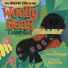 A longer story more suited to older kids (6+) but can be modified for younger ones. Factually accurate, fun bright illustrations, and discusses life cycle of the Isabella Tiger Moth!