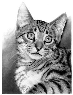 Pencil Drawings | Pencil Drawings Wow! At first glance, thought this was a real cat!