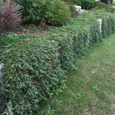 12 Best Retaining Wall Cover Ideas Images Garden Plants