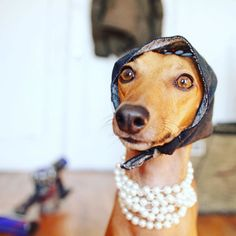 Whether she's off to snag some studs at Bingo night. | 21 Greyhounds That Are Sexier Than You, And They Know It