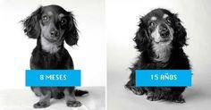 Cómo envejecen los perros. Fotos de antes y después – Mi Contenido Virtual