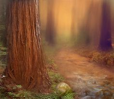 Santa Cruz Redwoods - Looks like a scene from OZ : )