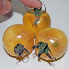 Blue Tomato Speckled Yellow ブルー・トマト・スペックルド・イエロー