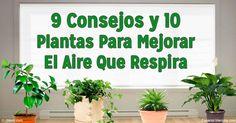 El aire que respira dentro de su hogar puede estar 5 veces más contaminado que el aire de afuera. Estos consejos le ayudan a bajar los niveles de contaminación. http://articulos.mercola.com/sitios/articulos/archivo/2016/05/18/calidad-del-aire-en-casa.aspx