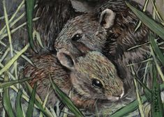 ACEO TW MAY Original Painting Bunny Nest rabbit rodent animals wildlife pets #Impressionism