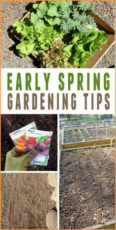 Early Spring Gardening Tips -- Everything you need to know to get an early start on your garden this spring!