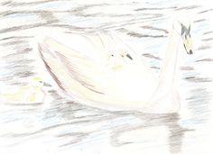 Cisnes dibujados con lápices de colores
