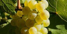 Vous avez aimé ce vin blanc sec, solide, élégant, pénétrant... Alors vous aimerez aussi...
