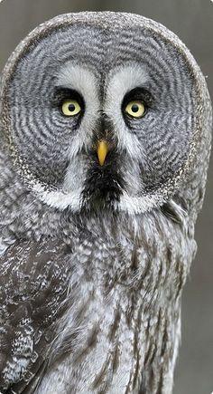 Owl, Sojourning Soul