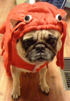 Rock Lobster Pug