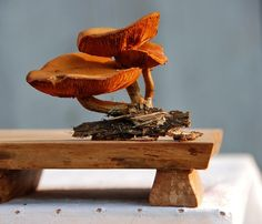 Mycology Cutting Board in Rustic Spalted Maple by Grayworksdesign