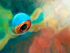 Ember Parrotfish, Maldives  Photograph by Paul Sutherland, National Geographic -- National Geographic