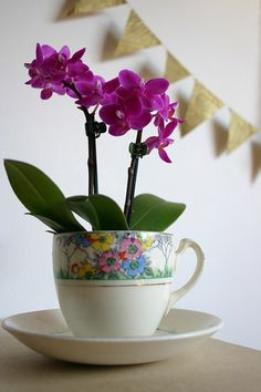 Orchids in a teacup vase?! Adorable.