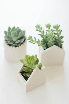 Houseplant display Ideas more (5)