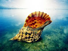 Shell is The usually hard outer covering that encases certain organisms, such as mollusks, insects, and turtles; the carapace.