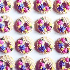 Donuts all line up {{ nutmeg & honeybee }}