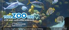 Welcome to the Columbus Zoo and Aquarium - Control the live webcams in the bear, aquarium, penguin and aviary exhibits